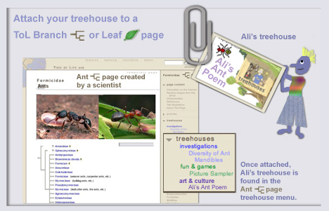 attach your treehouse to a ToL Branch page